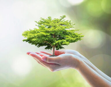 How to grow your lineage tree and find happiness